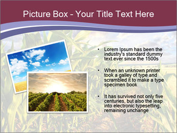 0000083135 PowerPoint Template - Slide 20