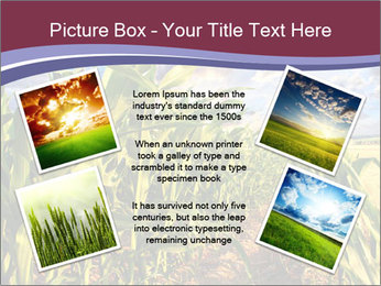 0000083135 PowerPoint Template - Slide 24