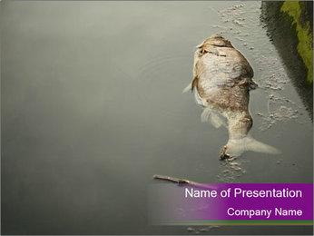 0000083152 PowerPoint Templates - Slide 1
