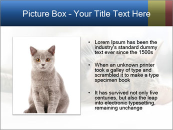0000083178 PowerPoint Template - Slide 13