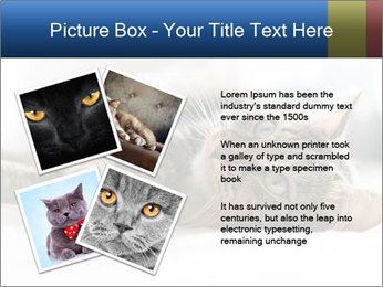 0000083178 PowerPoint Templates - Slide 23