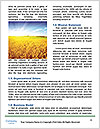 0000083196 Word Template - Page 4