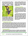 0000083246 Word Templates - Page 4