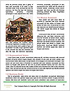 0000083281 Word Template - Page 4