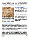 0000083286 Word Template - Page 4