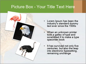 0000083309 PowerPoint Templates - Slide 17