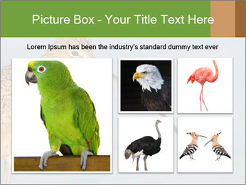 0000083309 PowerPoint Templates - Slide 19