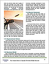 0000083350 Word Template - Page 4