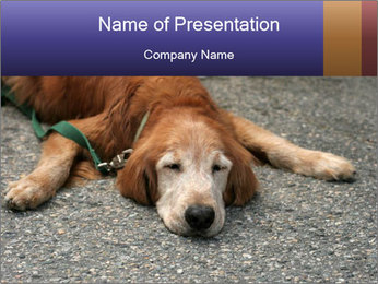 0000083363 PowerPoint Template - Slide 1
