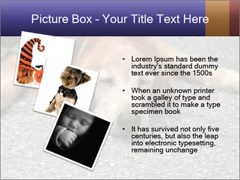 0000083363 PowerPoint Template - Slide 17