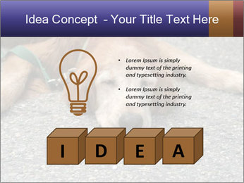0000083363 PowerPoint Templates - Slide 80