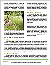 0000083371 Word Template - Page 4