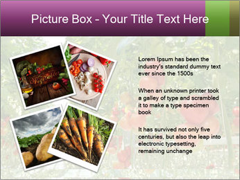 0000083372 PowerPoint Templates - Slide 23