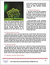 0000083404 Word Template - Page 4