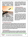 0000083519 Word Template - Page 4