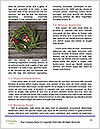 0000083585 Word Templates - Page 4