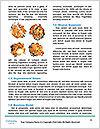 0000083603 Word Templates - Page 4