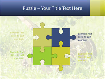 0000083623 PowerPoint Templates - Slide 43
