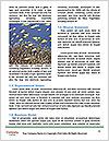 0000083627 Word Template - Page 4