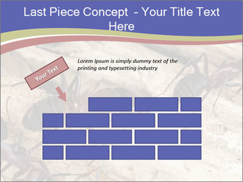 0000083633 PowerPoint Template - Slide 46