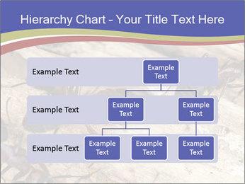 0000083633 PowerPoint Template - Slide 67