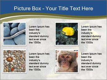 0000083635 PowerPoint Templates - Slide 14