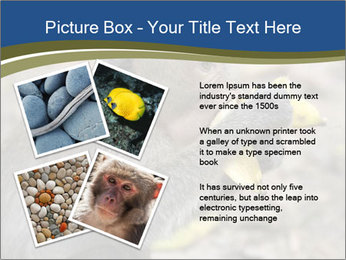 0000083635 PowerPoint Template - Slide 23