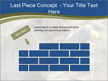 0000083635 PowerPoint Templates - Slide 46
