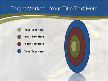 0000083635 PowerPoint Templates - Slide 84