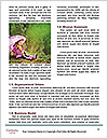 0000083636 Word Templates - Page 4