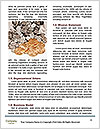 0000083656 Word Template - Page 4