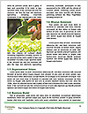 0000083674 Word Templates - Page 4