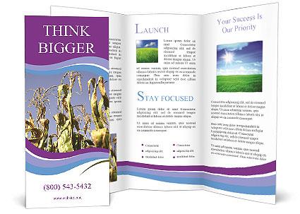 0000083705 Brochure Templates