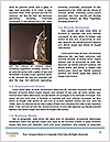 0000083730 Word Templates - Page 4