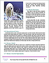 0000083762 Word Templates - Page 4