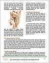 0000083775 Word Templates - Page 4