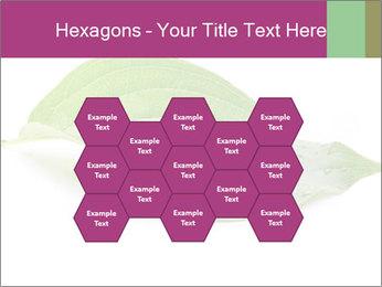 0000083778 PowerPoint Templates - Slide 44