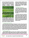 0000083778 Word Template - Page 4
