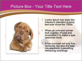 0000083795 PowerPoint Template - Slide 13