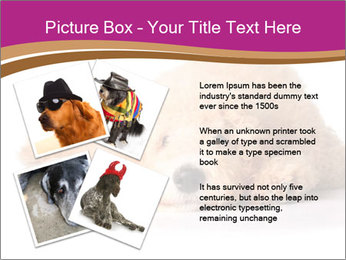0000083795 PowerPoint Template - Slide 23