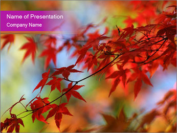 0000083819 PowerPoint Template - Slide 1