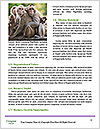 0000083864 Word Template - Page 4