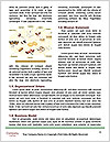 0000083959 Word Template - Page 4
