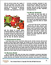 0000083987 Word Templates - Page 4