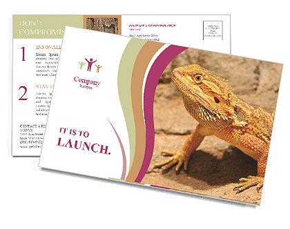 0000083997 Postcard Templates