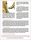 0000083997 Word Templates - Page 4