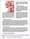 0000083998 Word Templates - Page 4