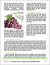 0000084007 Word Templates - Page 4