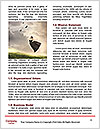 0000084029 Word Templates - Page 4
