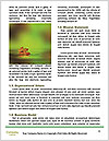 0000084032 Word Templates - Page 4